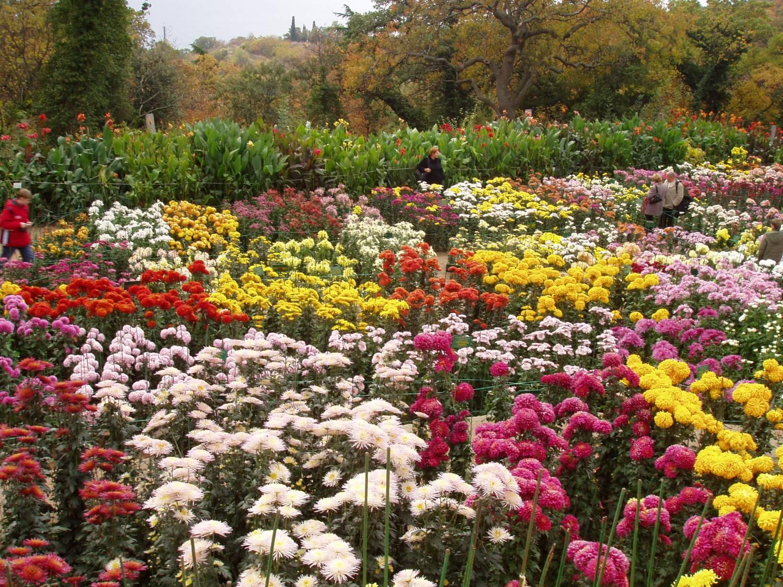 Осенние цветники цветы фото
